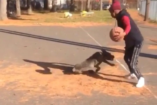 Dog gets hit with a killer crossover