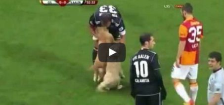 Puppies Interrupt Turkish Soccer Match Between Galatasaray and Aalen