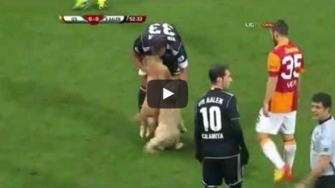 Puppies Interrupt Turkish Soccer Match
