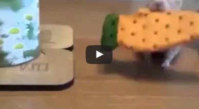 This is mine now – A dog steals a hamster's cookie…