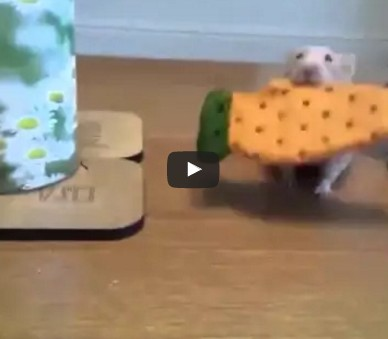 A dog steals a hamster's cookie...