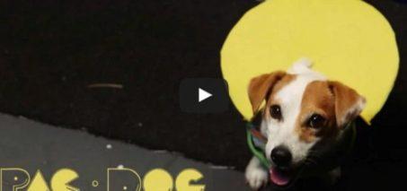 Pac-Dog (Animal Arcade Ep. 1)