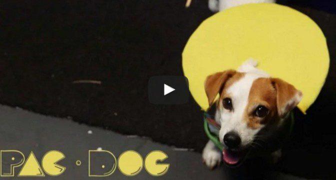 Pac-Dog