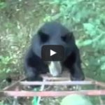 Hunter scares off bear – Canadian style