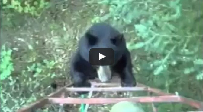 hunter scares off bear canadian style