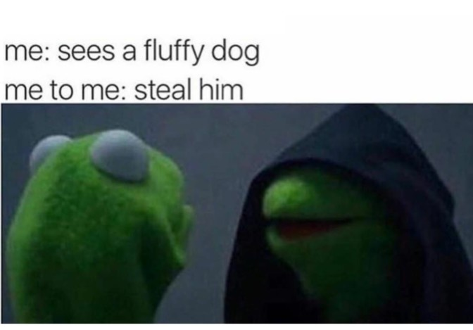 sees a fluffy dog steal him