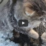 Couple finds a cat frozen to the ground and help him