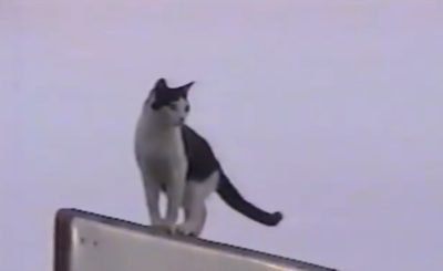 This Cat is Really Resourceful FunnyFuse Faves Sparky Slides the Pole