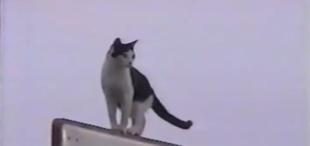 This Cat is Really Resourceful FunnyFuse Faves: Sparky Slides the Pole