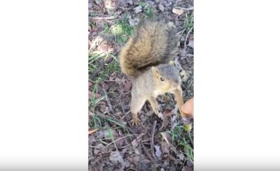 squirrel steals blunt